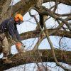 Удаление деревьев в Московской области