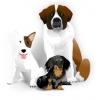 Передержка собаки с дрессировкой