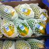 Предлагаем папайя из Бразилии