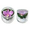 Цветы натуральные в стекле ( орхидеи )