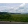 175 гектаров в Московской области