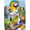 Приму в дар средних попугаев - в семью любящих птиц.