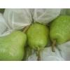 Прямые  поставки груши ,яблоки  из Аргентины