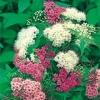 Растения из питомника для вашего сада