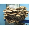Выращивание грибов шиитаке дома
