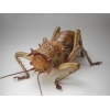 Уничтожение клопов, тараканов, муравьев за 45 минут