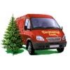 Живые елки и их доставка до вашего дома