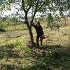 Покос газонов,  травы и бурьяна.  Зачистка территорий от кустарников и деревьев.